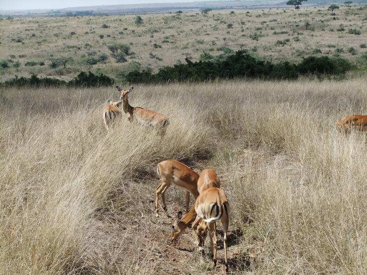 wilde Tiere Afrika Safari Nairobi Kenia
