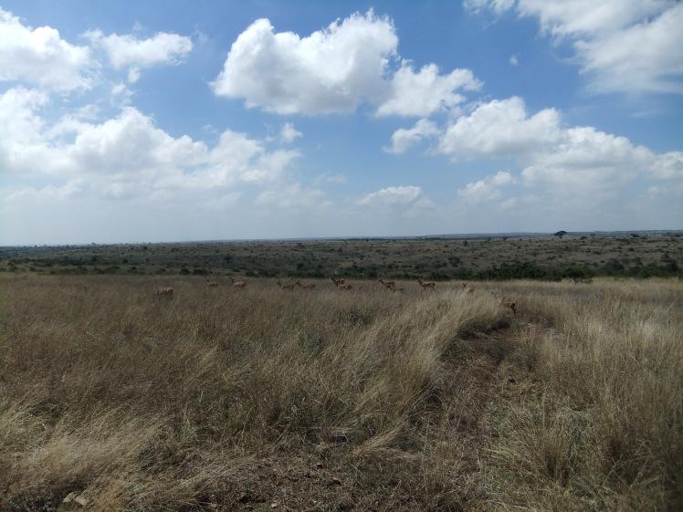 Landschaft Kenia Uganda Safari Afrika