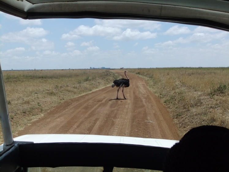 Safari Vogelstrauß Nairobi Kenia