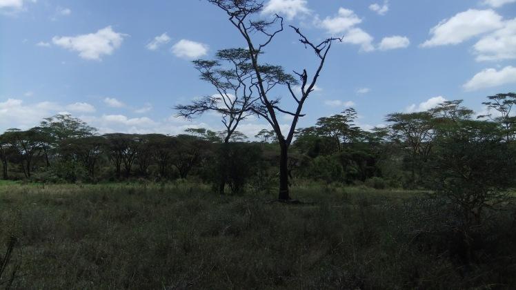 Natur Kenia Nairobi