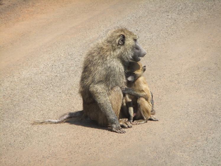 Affen Nairobi Tiere Safari Kenia Afrika