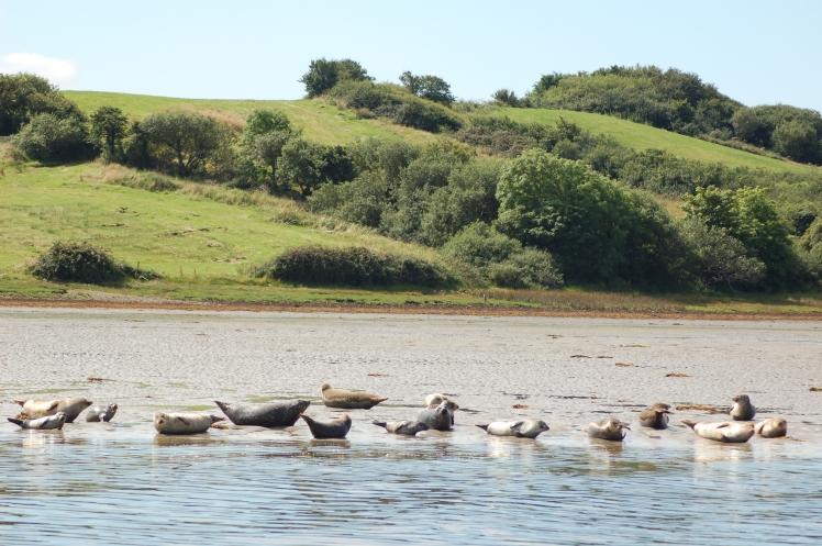 Robben Natur Rundreise Irland