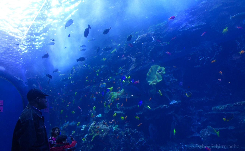 fische_aquarium_atlanta.jpg